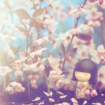 Il ciliegio è fiorito